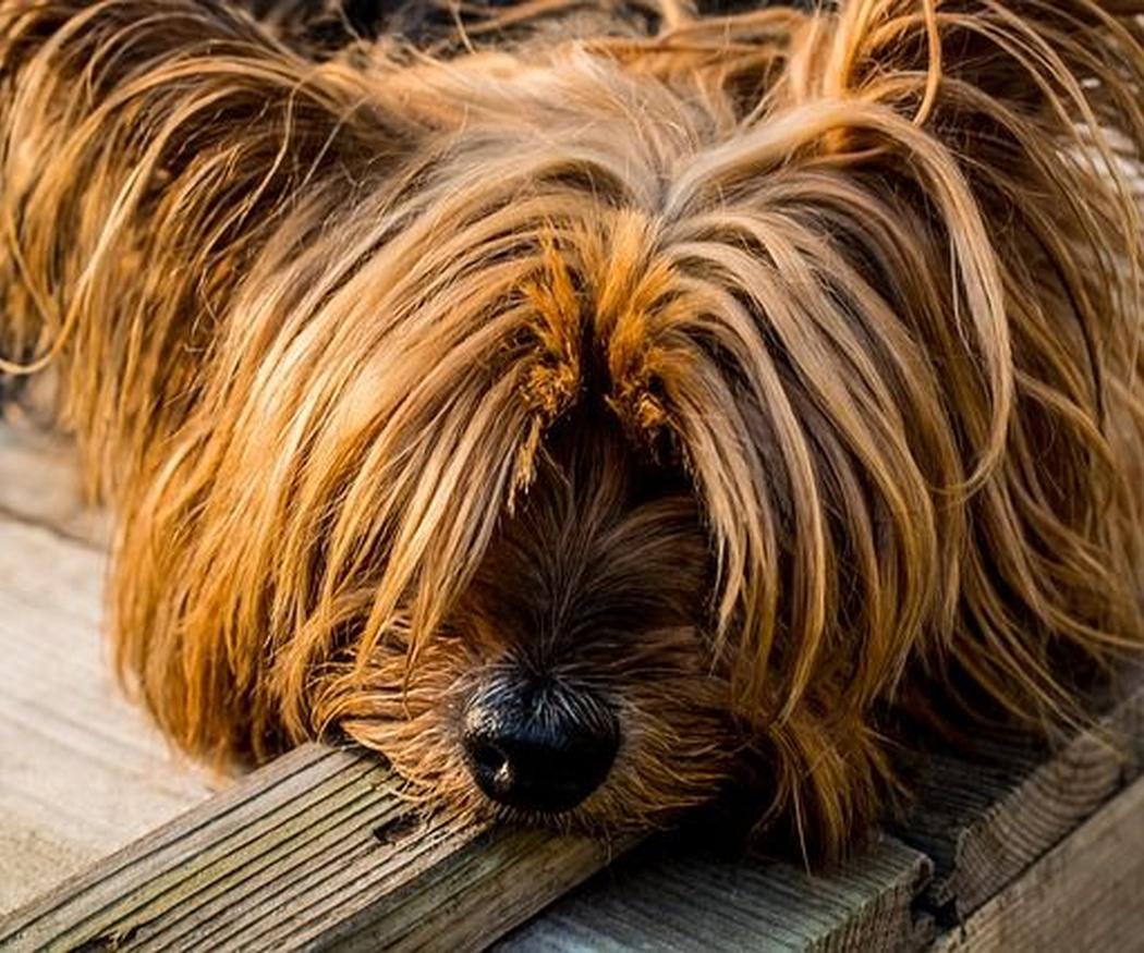Tendencias en nombres de perro