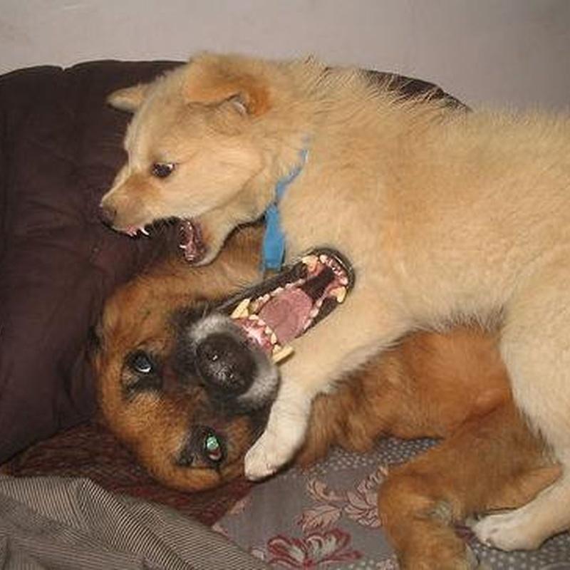 Gabinete de psicología canina y felina: Servicios de Hospital Veterinario Constitución