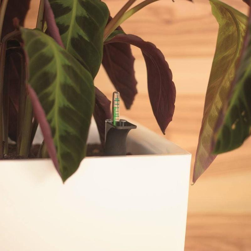 Doctor en plantas: Productos y servicios de Eiviss Garden