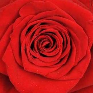 14 febrero día de los los enamorados