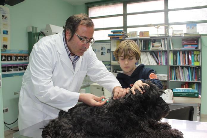 Veterinarios vacunas Zaragoza: Nuestros Servicios de Argos Clínica Veterinaria
