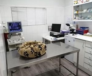 Veterinario en Leganés