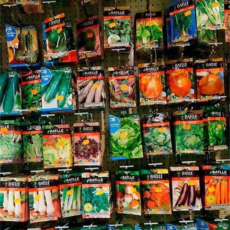Semillas y bulbos: Productos de FLORISTERÍA CASA BASUSTA