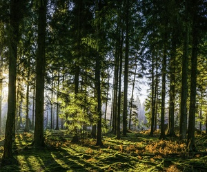 Trabajos forestales La Seu D'urgell