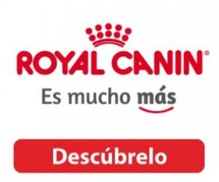 Complementos para mascotas Zaragoza