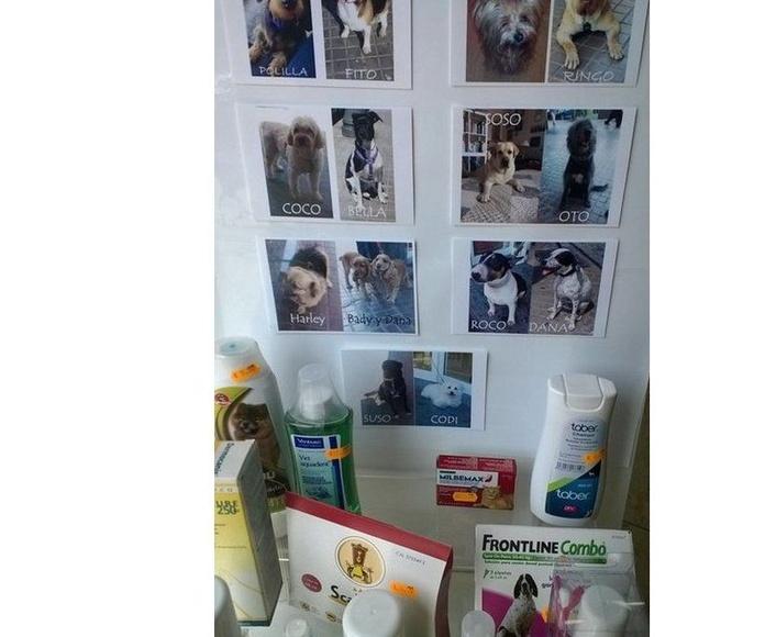 Veterinaria : Productos y Promociones de Farmacia Lucía