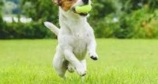 Paseos, perros y pelotas, ¿una buena combinación?