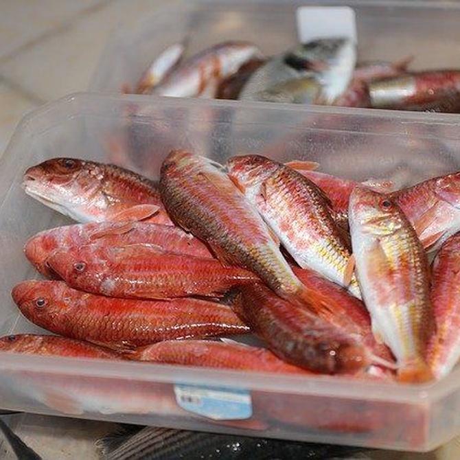 Los mejores pescados para consumir en invierno