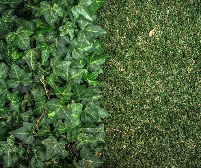 Césped artificial: Catálogo de Jardines del Picón