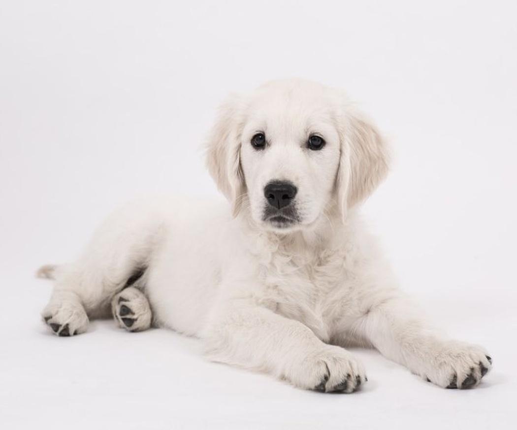 Nuevo cachorro en casa: ¿qué tener en cuenta? (I)