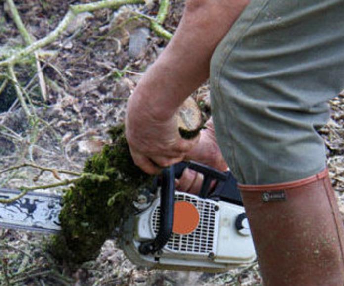 Desbroces: Trabajos de Panda Jardín