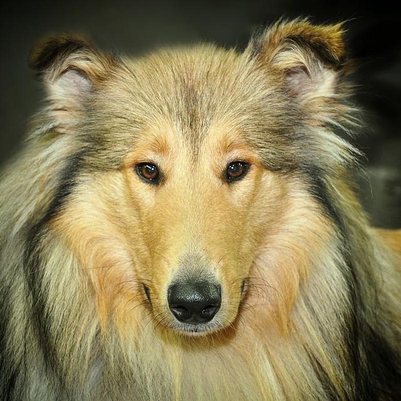 Peinado: Servicios de Beauty Dog Spa