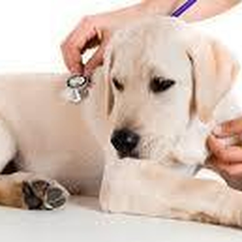 Medicina general: Servicios de Centro Veterinario Isla Mascota