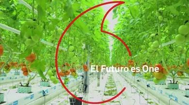 Hidroponía: cultivar sin tierra alimentará al planeta en el futuro