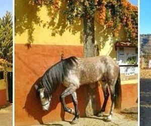 Montar a caballo. Clases de hípica