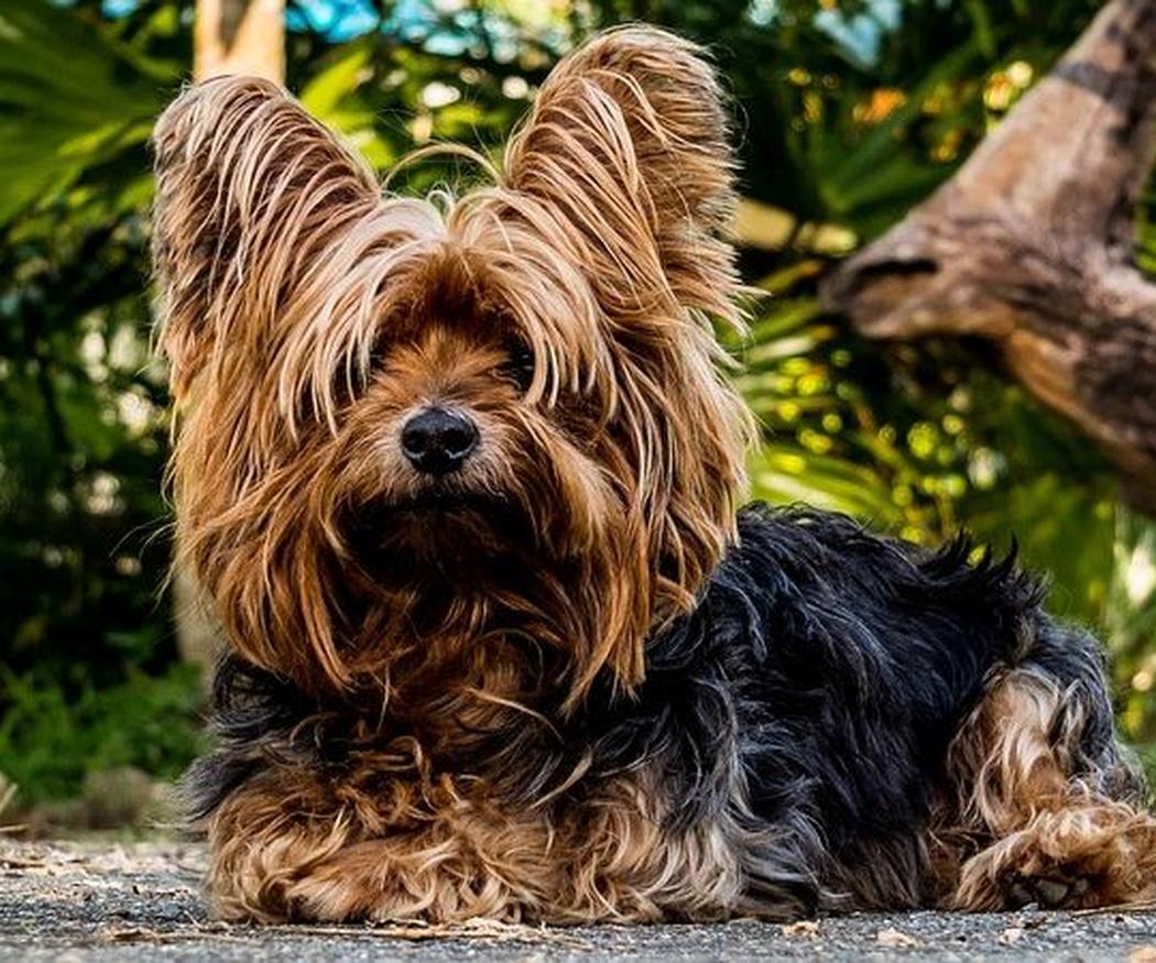 Consejos para cuidar el pelaje de tu perro
