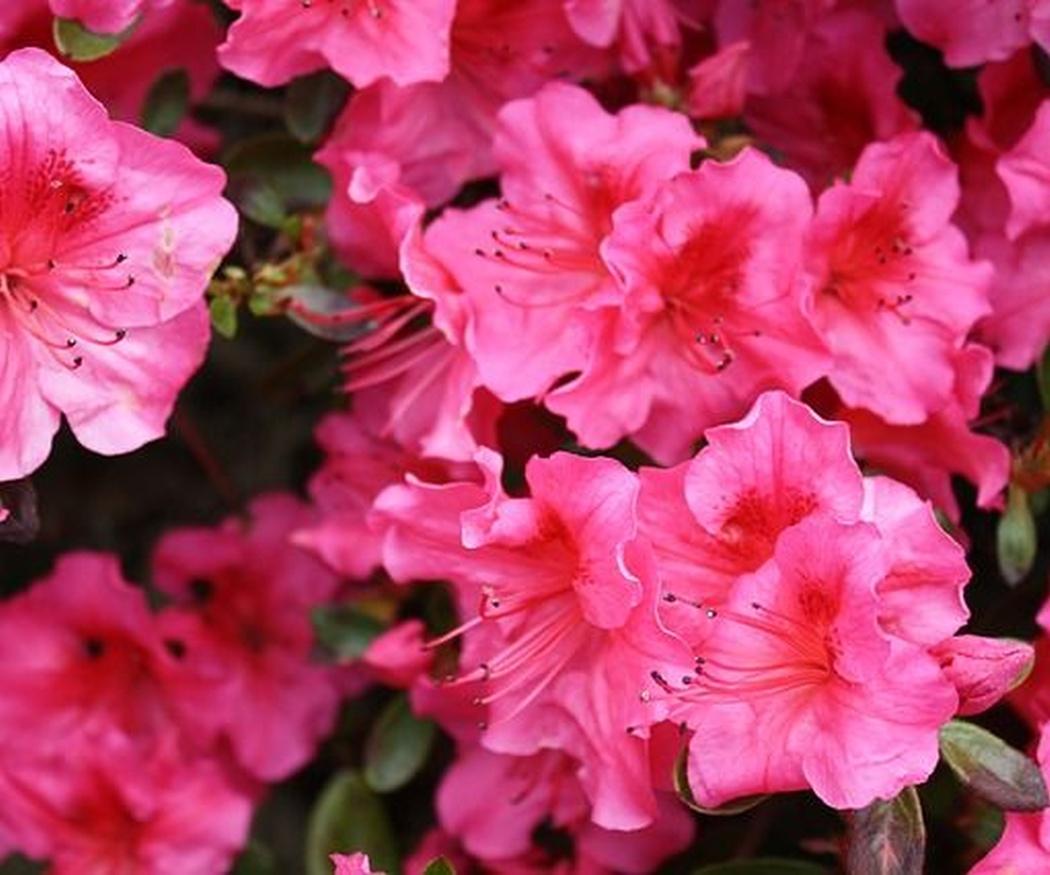 Los tipos de flores ideales para tu boda