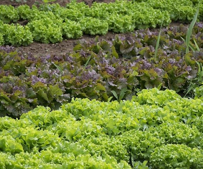 Huertos y cultivos particulares : Servicios de Món Verd