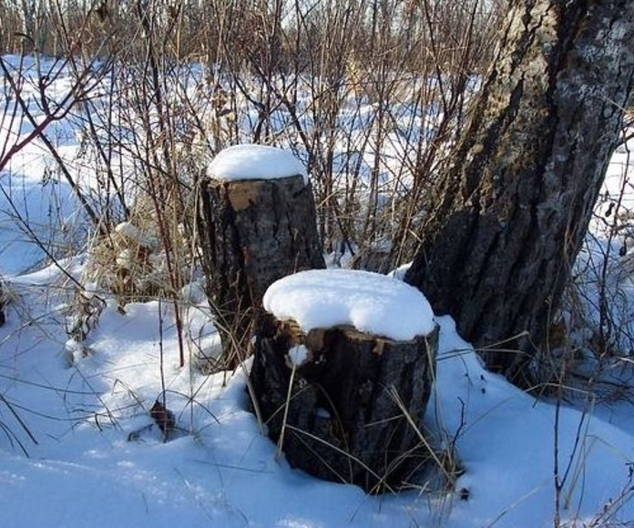 Entresacas: Productos y servicios de Forestal Arauzo