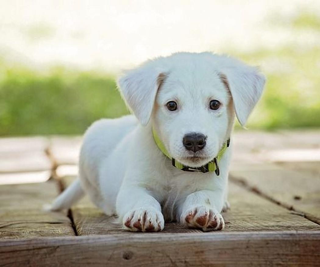 Causas por las que ladran los perros