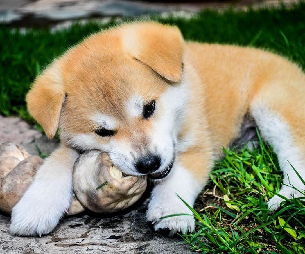Cuidados de la alimentación canina: olvídate de los huesos