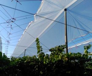Construcción de invernaderos en Alicante   Mateo e Hijos