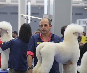 Preparamos tú mascota para exposiciones y concursos