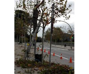 Poda de árboles en Barcelona