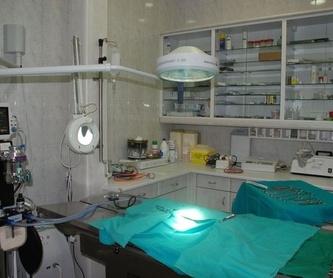 Venta de productos ONLINE: Especialidades  de Centro Veterinario Veracruz