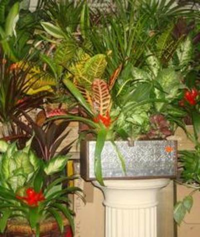 Todos los productos y servicios de Jardines (diseño y mantenimiento): Garden Rivas Flores y Plantas