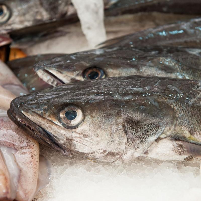 Comercio mayorista de pescado fresco: Servicios de Fernando Ortega Llanera S.L.