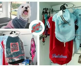 Alimentación: Productos y servicios de Academia de Estética Canina Woof Meow