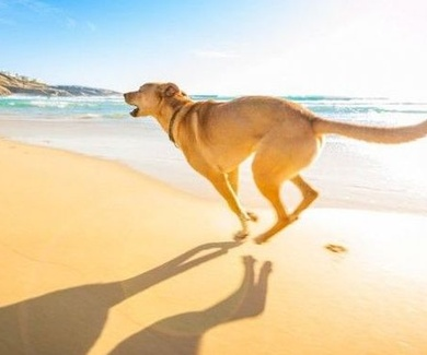 Playas para Perros en España 2017 - LISTADO OFICIAL