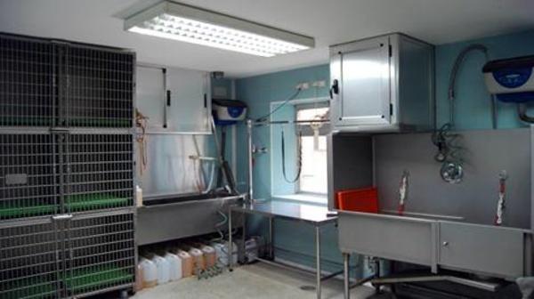 Peluquería: Servicios veterinarios de Centro Veterinario Ciudad de los Ángeles