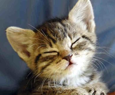 """Los gatos y el """"amasado"""""""