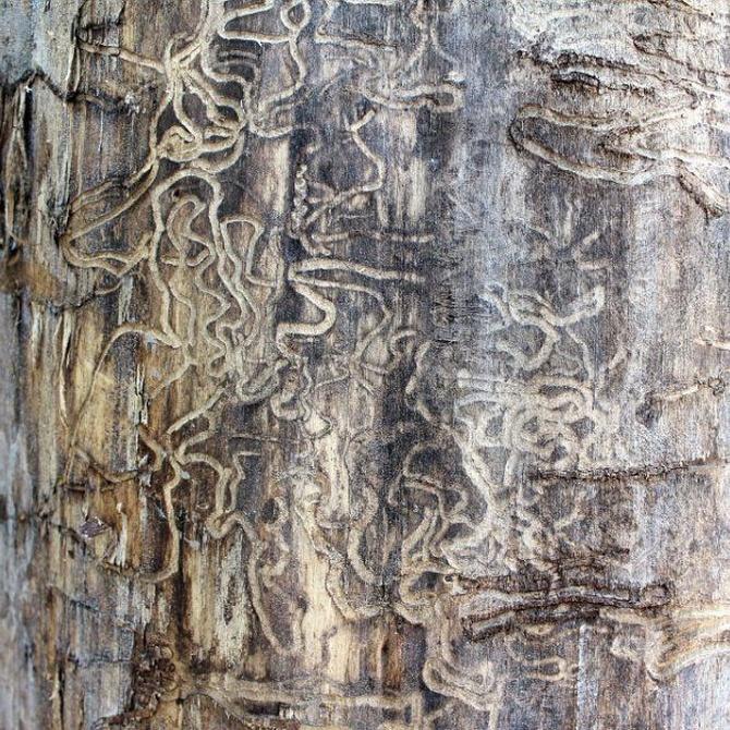 Graves problemas de la madera