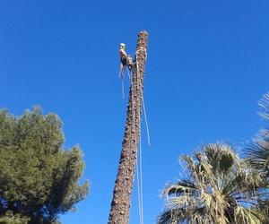 Tala de árboles y palmeras