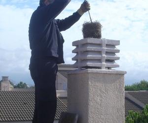 Extracción de nido.