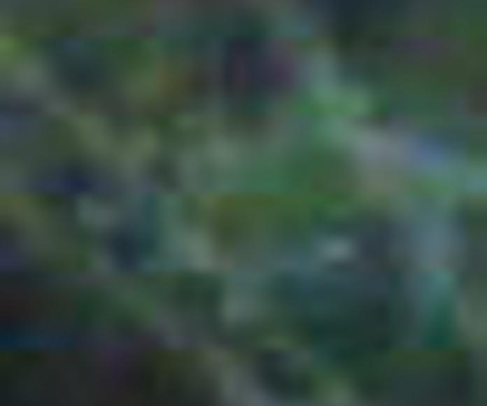 Diseño jardines Valencia, Mantenimiento de jardines Valencia, Construccion de jardines Valencia, Proyectos de jardineria Valencia, Paisajismo Valencia, Poda de palmeras Valencia, Mantenimiento de comunidades Valencia, Sistema de riegos jardines Valencia,