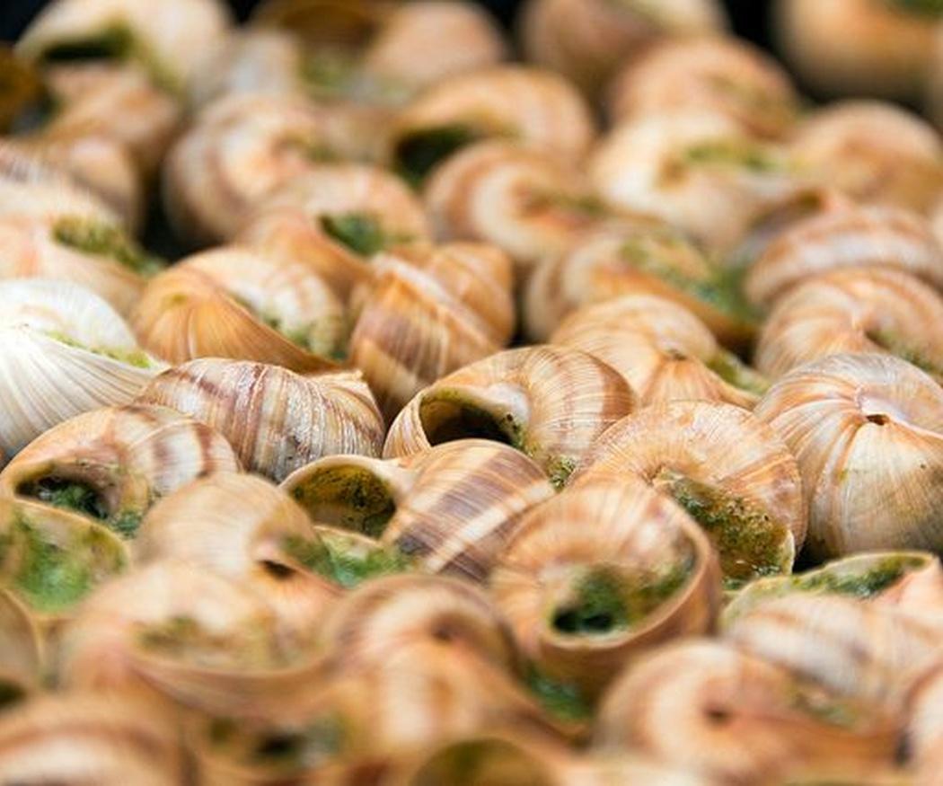 Los caracoles: una delicia entre la necesidad y la excentricidad