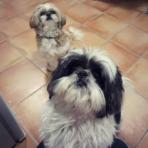 Clínica veterinaria Caldes de Montbui | Arca Veterinaria