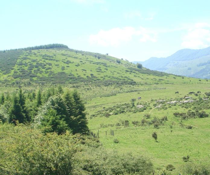 Monte de Pagoeta
