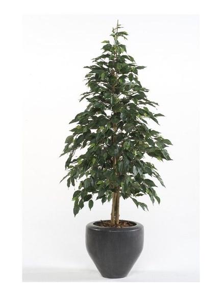 Árbol Ficus acabado Harmony: ¿Qué hacemos? de Ches Pa, S.L.