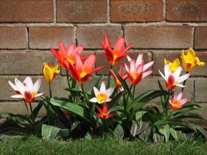 Cómo mantener un jardín bien cuidado todo el año