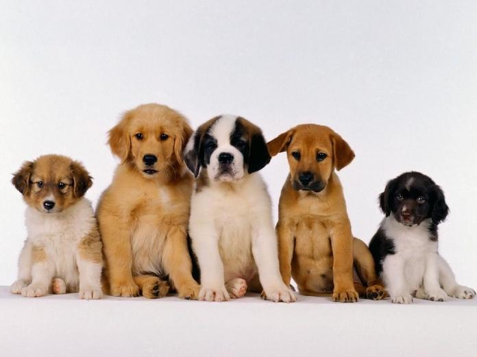 Vacuna a tu cachorro en Sevilla