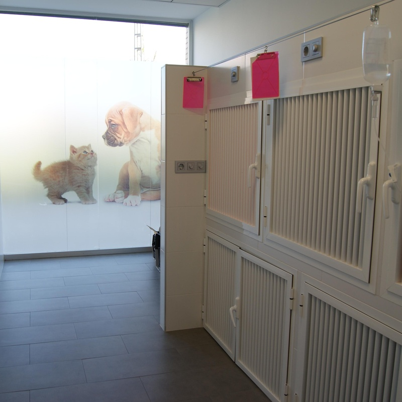 Hospitalización centro veterinario Juan XXIII