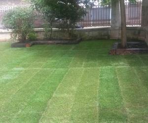 Renovación de jardines