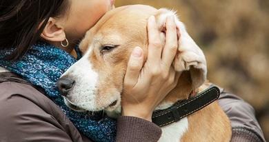 Cuidar a una mascota enferma: El enorme costo emocional del que nadie habla