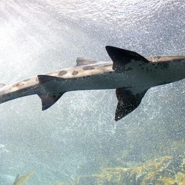 La curiosa sopa de aleta de tiburón  en la cultura china