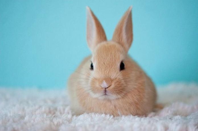 Alimentación y accesorios para conejos, roedores y aves